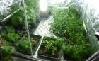 cdon_cannabis