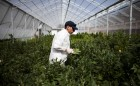 weed-startups-high-times-magazine-is-launching-a-private-equity-fund-for-marijuana-businesses