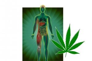 hash_medicine2