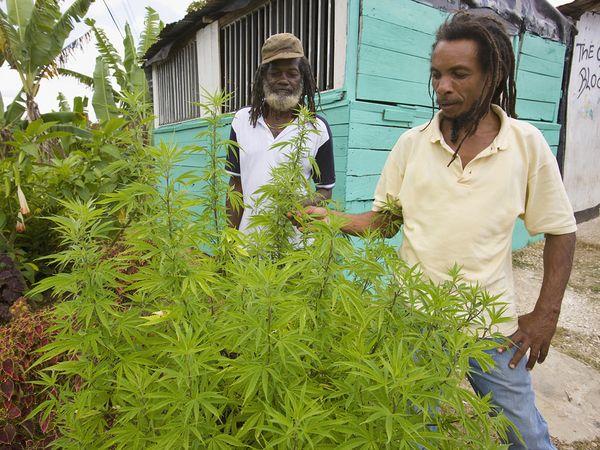 jamaica-marijuana-hbtv-hemp-beach-tv